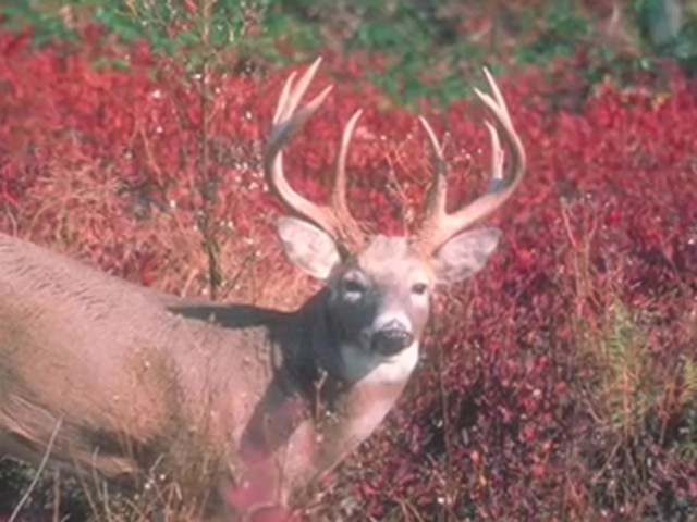Knight & Hale® EZ-Grunt-er Deer Call  - image 7 from the video