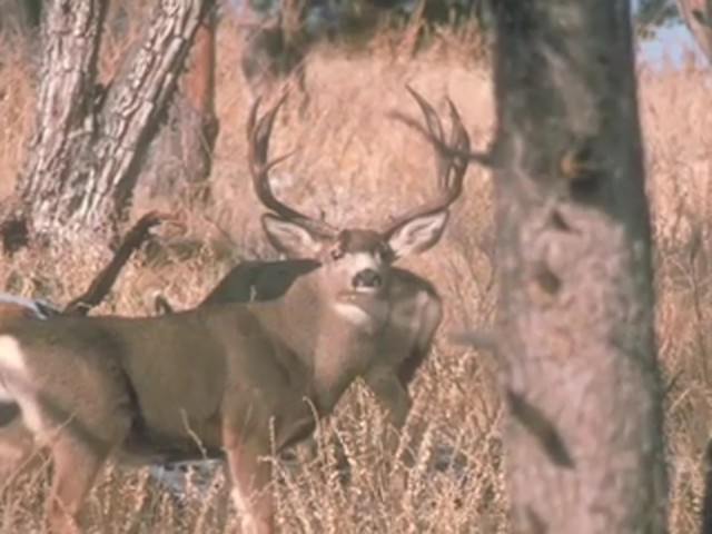 Knight & Hale® Magnum Grunter Deer Call  - image 6 from the video