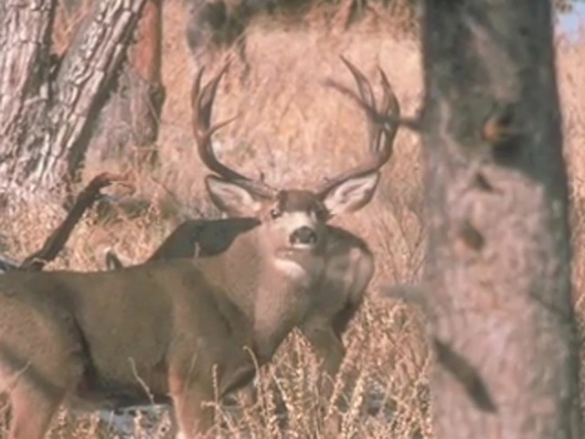 Knight & Hale® Magnum Grunter Deer Call  - image 7 from the video