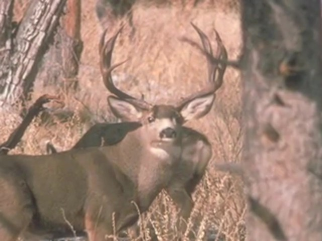 Knight & Hale® Magnum Grunter Deer Call  - image 8 from the video