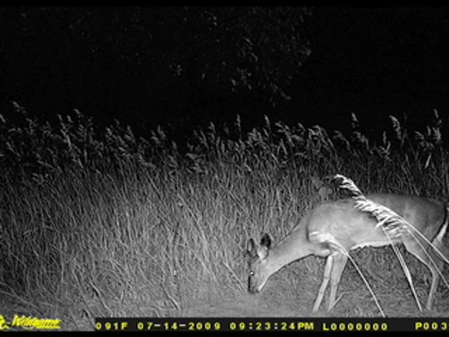 Wildgame Innovations® 6 - megapixel IR / Flash Digital Game Camera - image 5 from the video