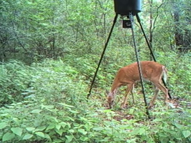 Wildgame Innovations® 6 - megapixel IR / Flash Digital Game Camera - image 7 from the video
