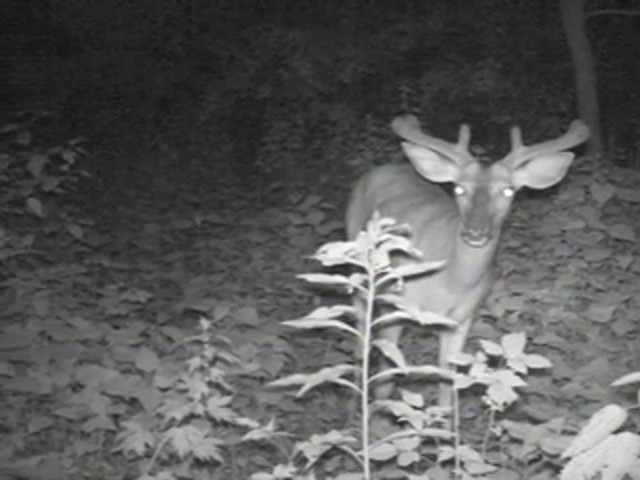 Bushnell® Trophy Cam™ - image 7 from the video