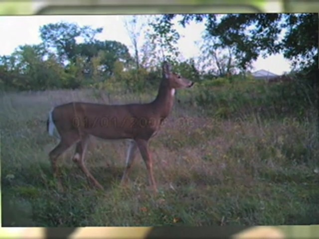 SpyPoint™ Pro - X 12 - megapixel Game Camera - image 6 from the video