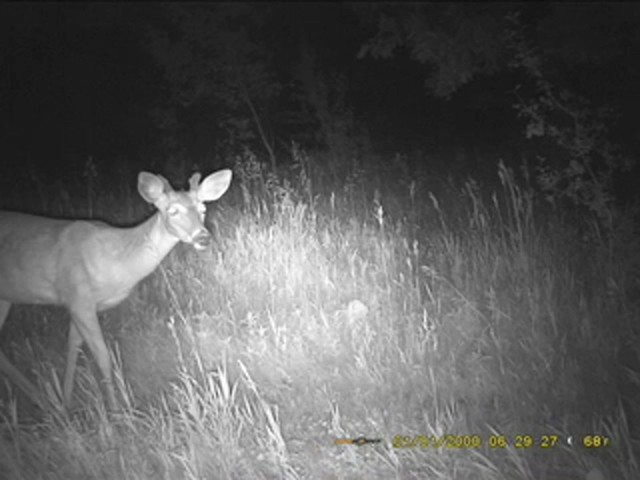 SpyPoint™ Pro - X 12 - megapixel Game Camera - image 7 from the video