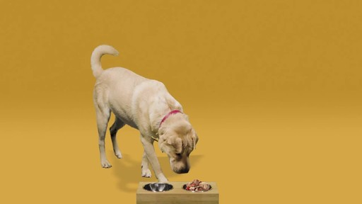 Merrick Grain Free Wet Dog Food - image 1 from the video