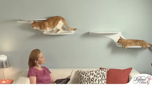 Cloud Shelf by The Refined Feline - image 4 from the video
