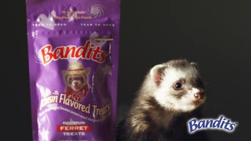 Bandits Ferret Treats  - image 2 from the video