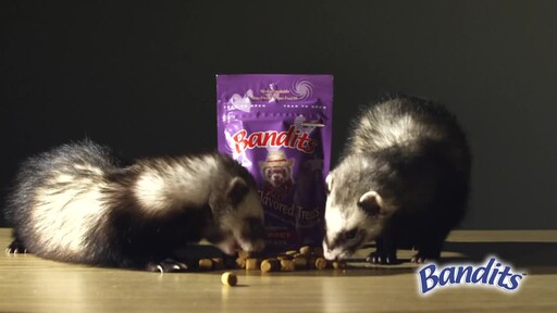 Bandits Ferret Treats  - image 6 from the video