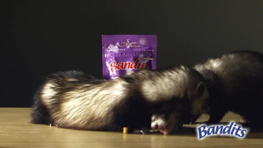 Bandits Ferret Treats  - image 9 from the video