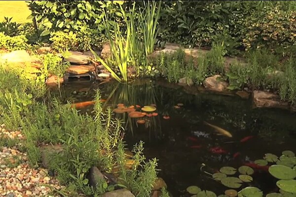 How-to Choose Plants for Your Pond - image 9 from the video