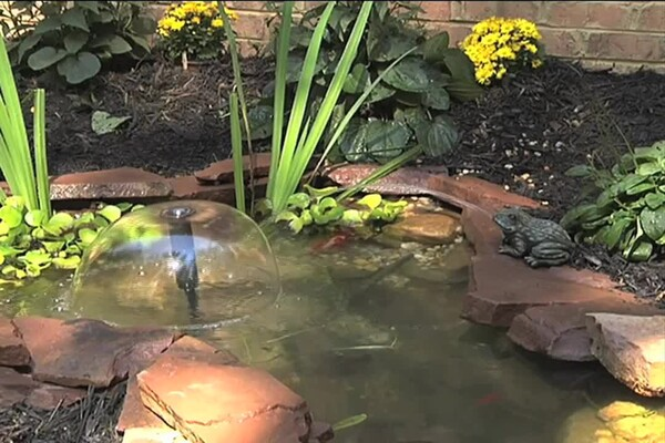 Planning Your Pond - image 7 from the video