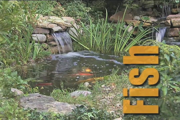 Benefits of Fish in Your Pond - image 1 from the video