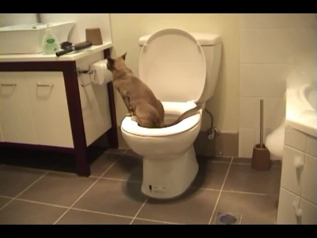 Litter Kwitter Toilet Training System - image 3 from the video