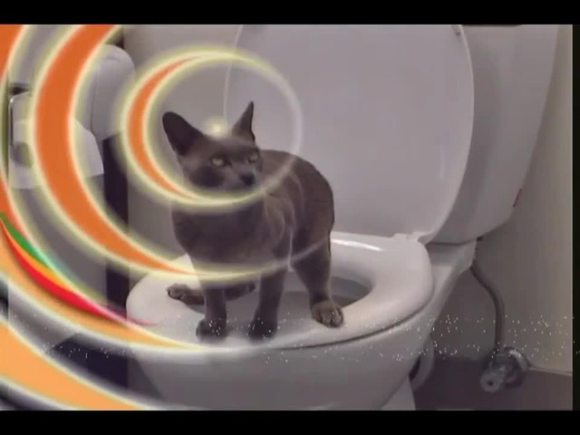 Litter Kwitter Toilet Training System - image 6 from the video