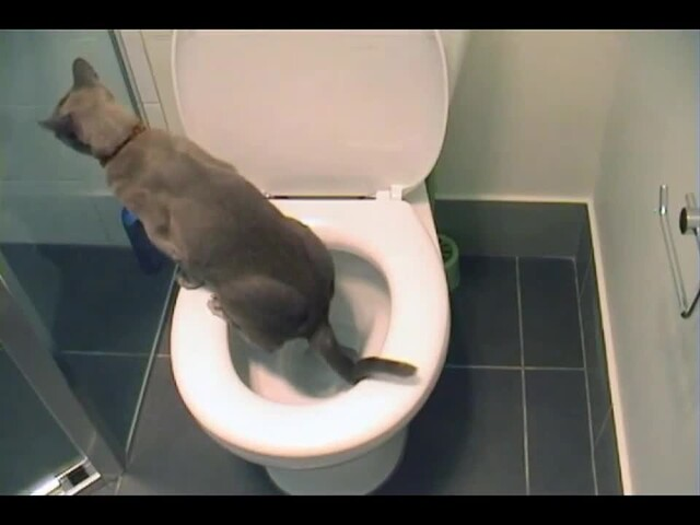Litter Kwitter Toilet Training System - image 8 from the video