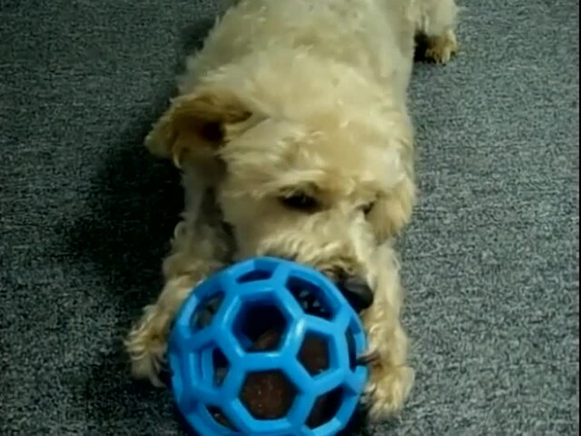 Hol-EE Roller Dog Toy - image 10 from the video