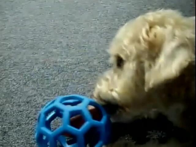 Hol-EE Roller Dog Toy - image 2 from the video