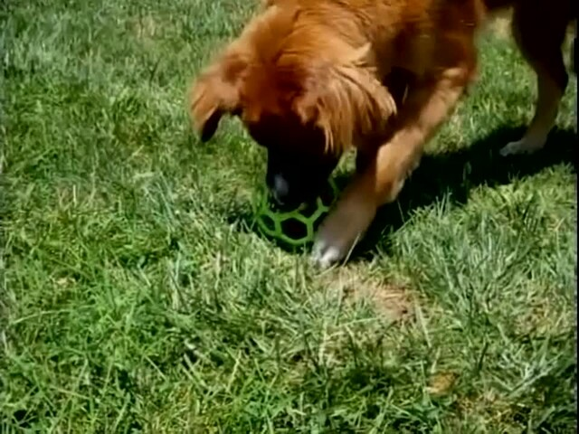 Hol-EE Roller Dog Toy - image 5 from the video