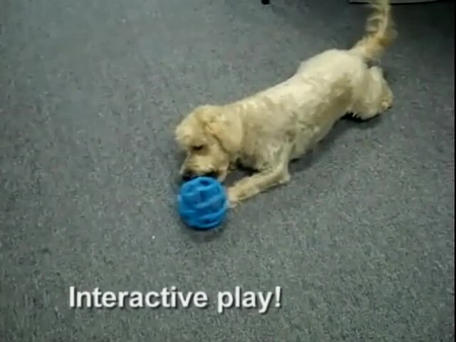 Hol-EE Roller Dog Toy - image 6 from the video