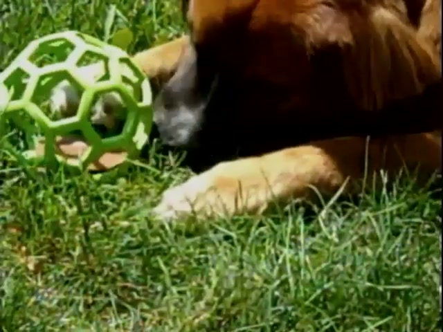 Hol-EE Roller Dog Toy - image 7 from the video