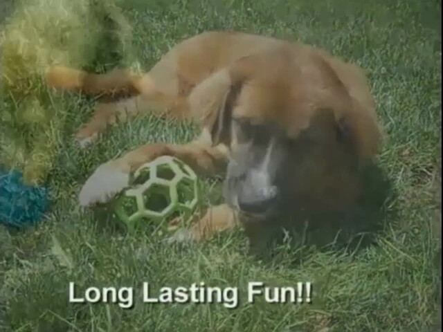 Hol-EE Roller Dog Toy - image 9 from the video