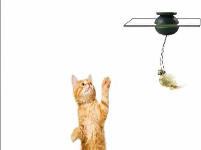 FroliCat Sway Magnetic Teaser Cat Toy - image 1 from the video