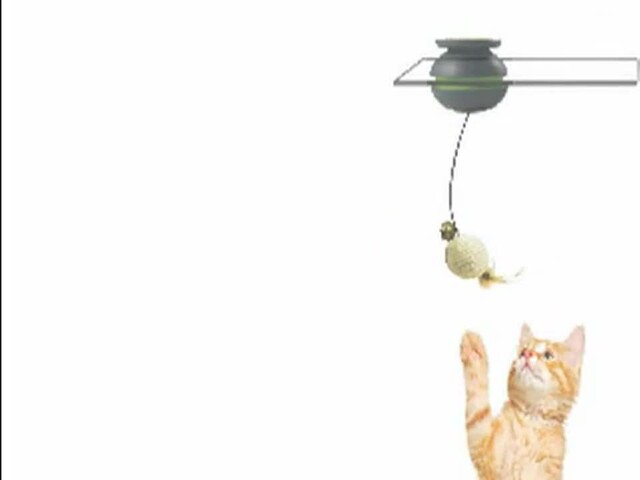 FroliCat Sway Magnetic Teaser Cat Toy - image 2 from the video