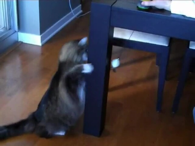 FroliCat Sway Magnetic Teaser Cat Toy - image 3 from the video