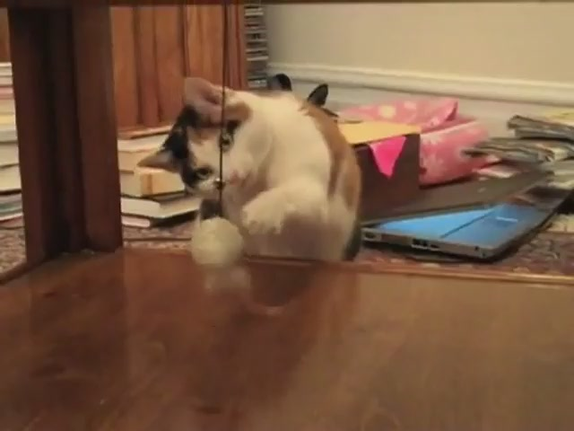 FroliCat Sway Magnetic Teaser Cat Toy - image 4 from the video