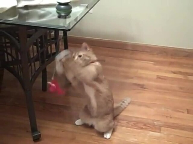 FroliCat Sway Magnetic Teaser Cat Toy - image 6 from the video