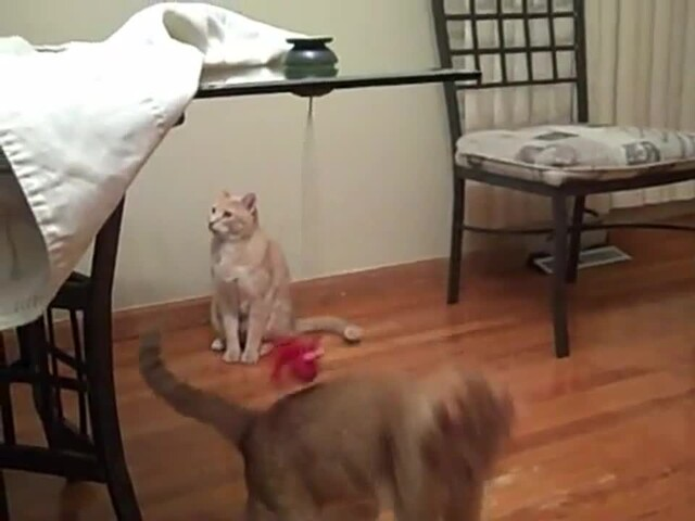 FroliCat Sway Magnetic Teaser Cat Toy - image 9 from the video
