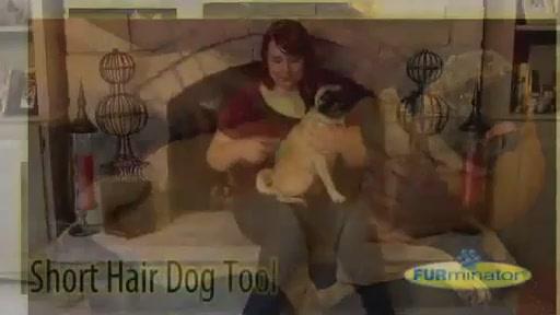 FURminator Short Hair Dog - image 2 from the video