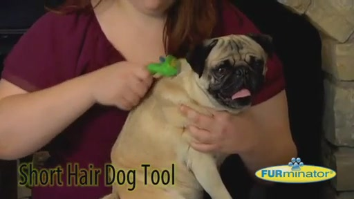 FURminator Short Hair Dog - image 4 from the video