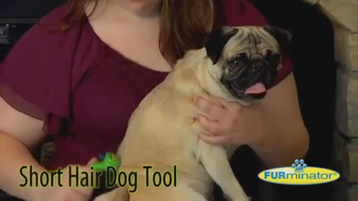 FURminator Short Hair Dog - image 5 from the video