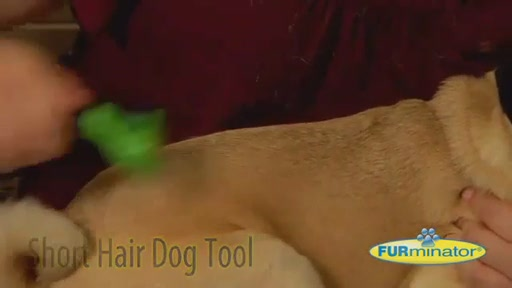 FURminator Short Hair Dog - image 6 from the video