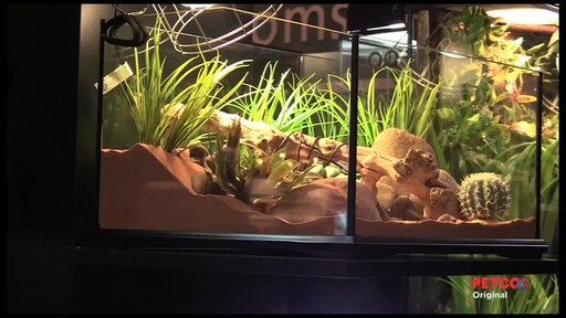 How-to Set Up a Desert Terrarium - image 8 from the video