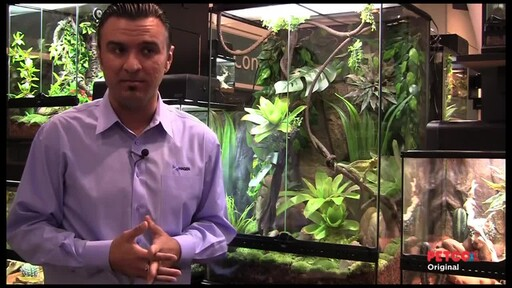 How-to Set Up a Rainforest Terrarium - image 3 from the video