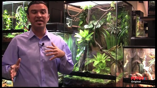How-to Set Up a Rainforest Terrarium - image 4 from the video