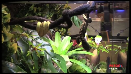 How-to Set Up a Rainforest Terrarium - image 7 from the video
