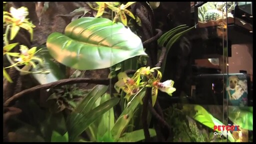 How-to Set Up a Rainforest Terrarium - image 8 from the video