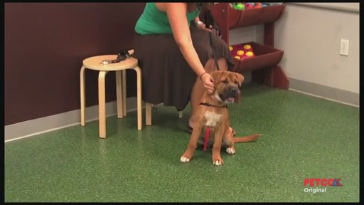 Meet a PETCO Dog Trainer - image 2 from the video