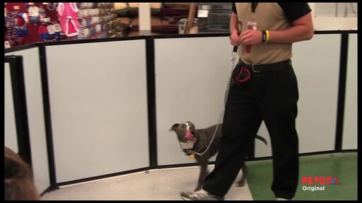 Meet a PETCO Dog Trainer - image 3 from the video