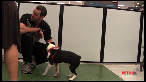 Meet a PETCO Dog Trainer - image 6 from the video