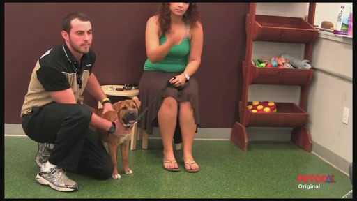 Meet a PETCO Dog Trainer - image 7 from the video
