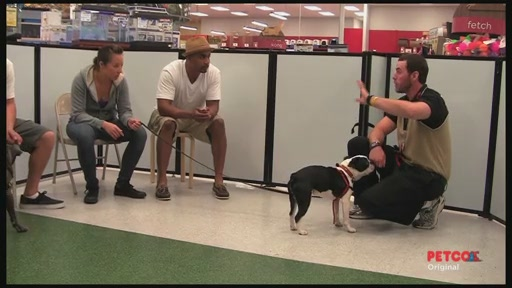 Meet a PETCO Dog Trainer - image 8 from the video
