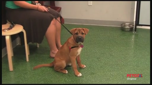 Meet a PETCO Dog Trainer - image 9 from the video