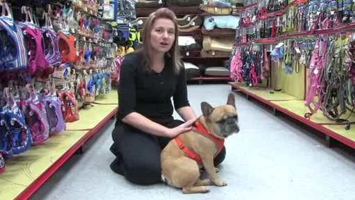 Petco Adjustable Mesh Harness for Dogs - image 6 from the video